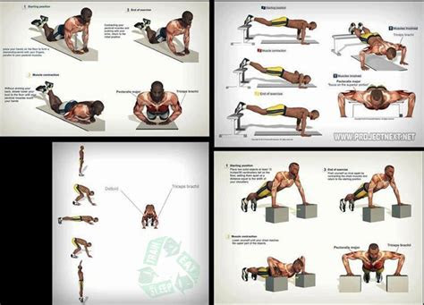 types  push ups   muscles http