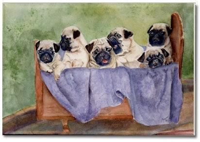 Pugs Family