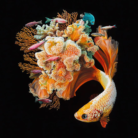 Amazing Hyperrealistic Painting Of Fish Combined With Their Surroundings