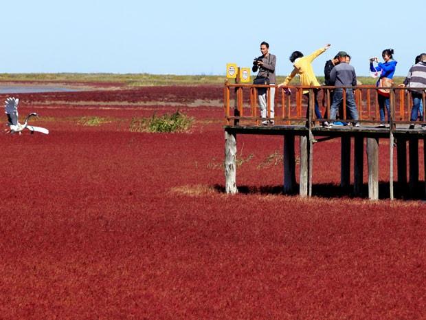 Turistas tiram fotos da praia vermelha em Panjin, na China (Foto: AFP)