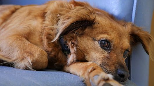 4 Ways to Calm a Dog After a Seizure - Dog Training Advice Tips