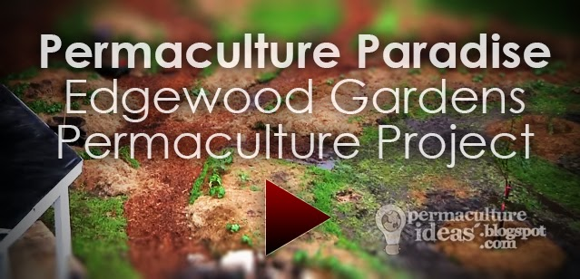 Permaculture Ideas: Permaculture Paradise: Edgewood ...