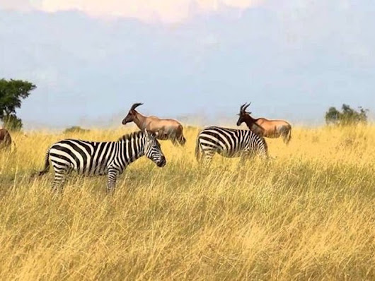 YHA Kenya Travel Tours and Safaris