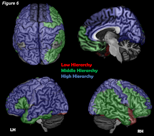 Where is my mind? New study looks for the cortical conscious network