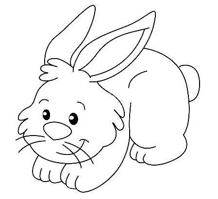 Dibujos De Conejos Para Colorear Reino Animal