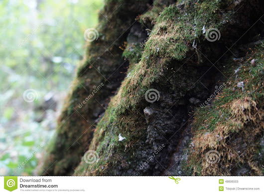 Bark And Moss Stock Photo - Image: 48606503