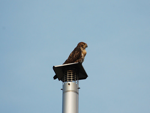 Roof-Deck Hawk