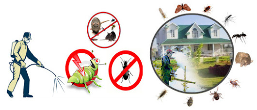 IMPORTANT QUESTIONS?- THE PEST CONTROL COMPANY