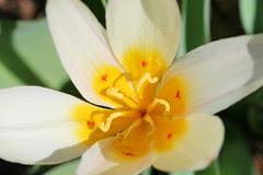 spring flowers 063