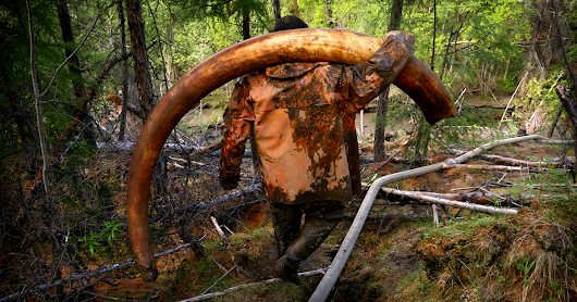 Every Summer, Men Go To Siberia To Hunt For Mammoth Tusks – They Get Rich, Get Drunk And Nearly Die