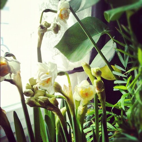 Spring is coming by la casa a pois