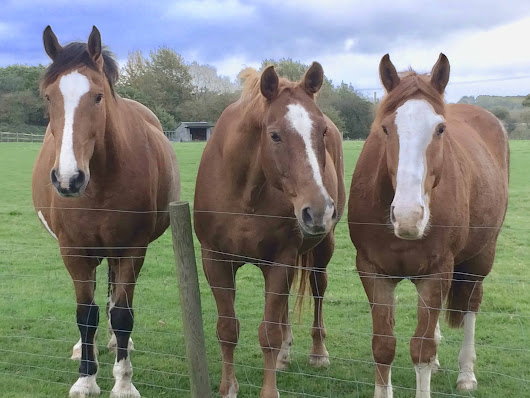 Behind the Scenes With Blood Donor Horses - The Horse