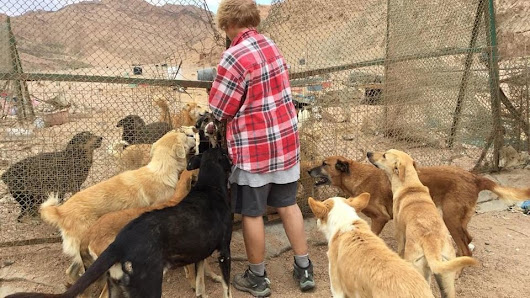EGYPTIAN GOVERNMENT IS ABOUT TO KILL 200 DOGS. HELP!!!