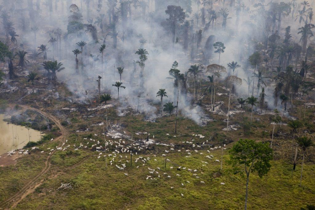 Campanha Farra do Boi deu início ao Compromisso Público pela Pecuária em 2009. Foto: Greenpeace/Daniel Beltra.