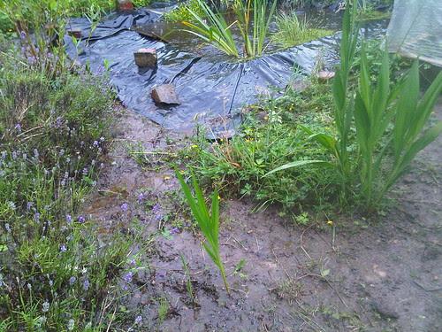 mud on allotment Jul 12 2
