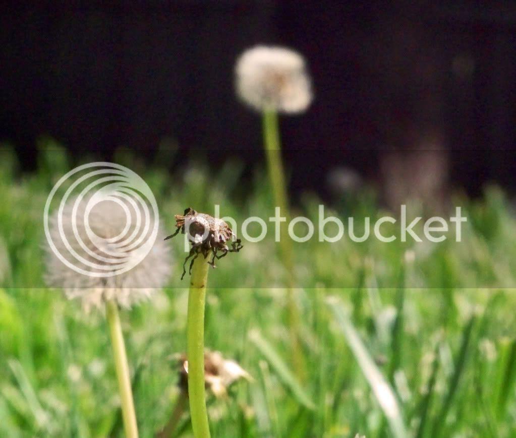 blog,flowers