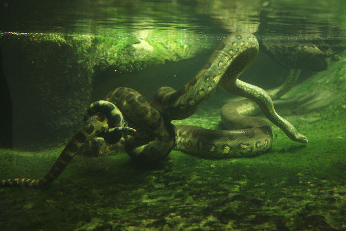 Dreaming About Snakes In Water Dream Interpretation Symbols