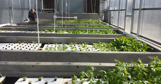 Greenhouse Aquaponics system for TJ orphanage
