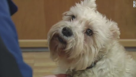 Dog journeys to hospital to find owner