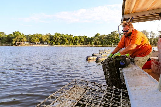 Farming Fresh Oysters in Gulf Shores, Alabama: A Fun & Tasty Sea-to-Table Experience!