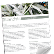 Tillandsia Care Cheat Sheet - NewPro Containers