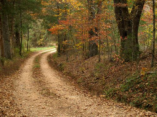 Beechwood road