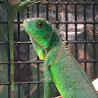Reptile, Amphibian and Exotic Pet Care and Information | That Reptile Blog