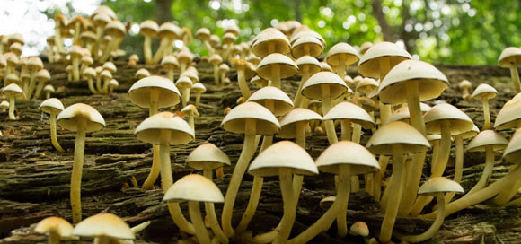 Fungi in Sydenham Hill Wood