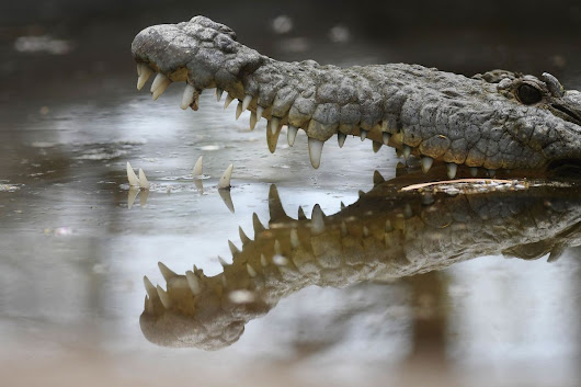 Diamond Industry's Famous Hungry Crocodile Doesn't Cut It