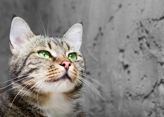 7 Cool Facts About Your Cat's Whiskers | Catster