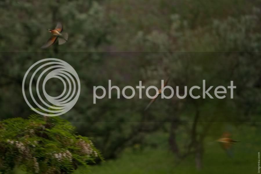 Pasari din Moldova,Ion Grosu,moldovabirds.blogspot.com