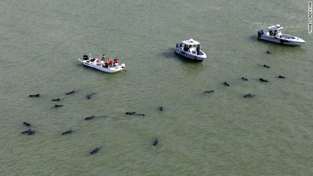 http://i2.cdn.turner.com/cnn/dam/assets/131205211533-01-whales-1205-horizontal-gallery.jpg