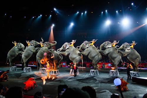 Circus-19