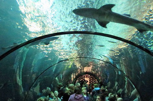 Oregon Coast Aquarium 19