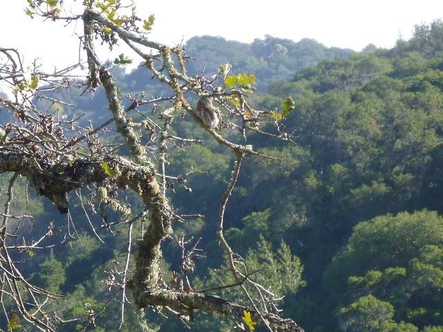 Nature S Kick Honey Sticks