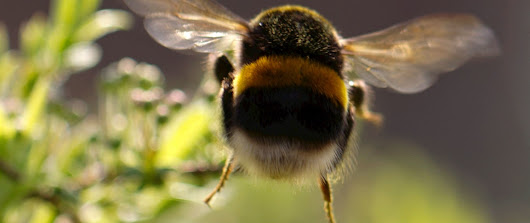 Uncovering the link between bees and climate change