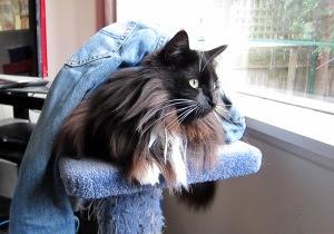 cat-has-jeans1
