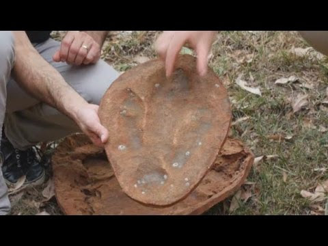 Researchers unveil 'unparalleled' dinosaur footprint discovery