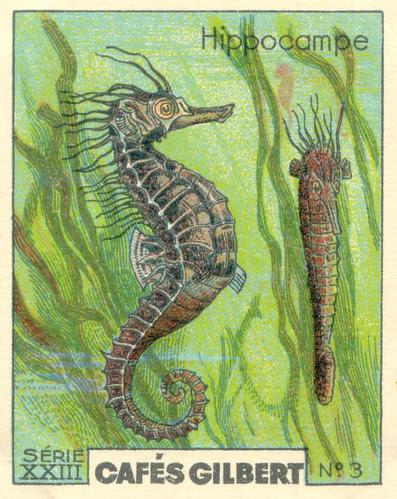 gilbert poissons 3