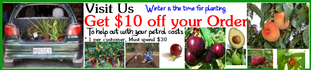 Visit Us in Kyogle and get $10 off your order to go towards your petrol costs