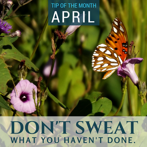 Homeschool Science Tip of the Month {Don't Sweat It!}