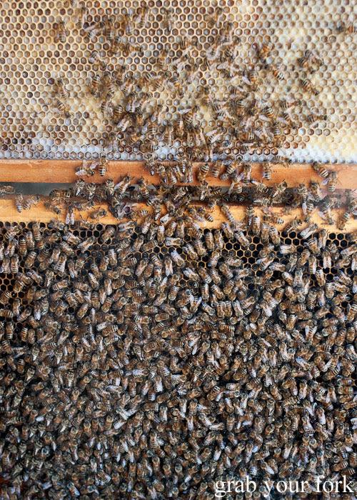 Worker bees at Clifford's Honey Farm, Kangaroo Island