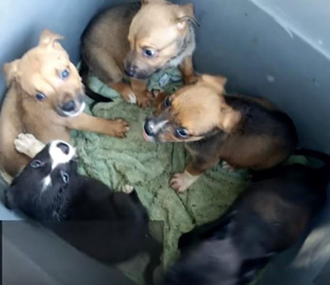 Encuentran a 6 indefensos cachorros en el fondo de un contenedor de basura dejados para morir