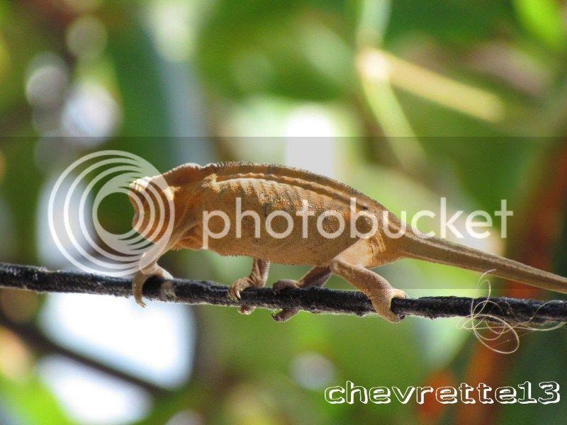 http://i1252.photobucket.com/albums/hh578/chevrette13/Madagascar/IMG_2402Copier_zps62144080.jpg