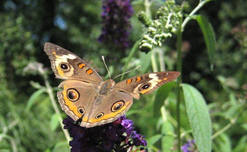 It S Not Work It S Gardening Time For Some Butterflies