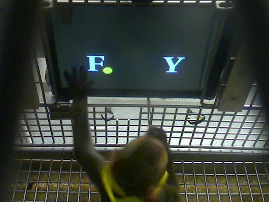 Easy As Pi! Monkeys Can Do Math - NBC News