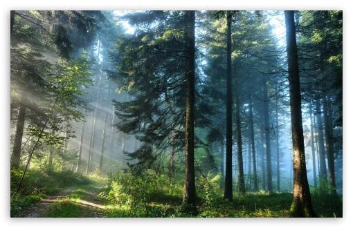 Forest Wallpaper 4k 720p Nature Wallpaper