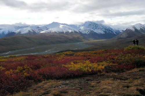 Alaska greeenery