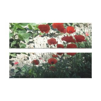 red poppies in the field canvas print