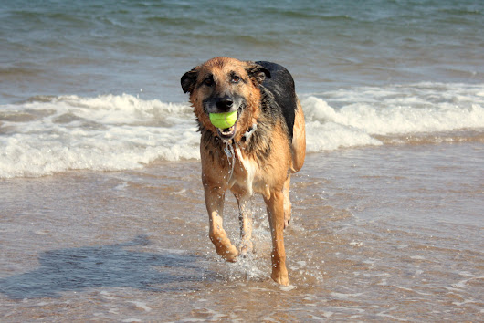 Keep Your Pup Safe At The Beach